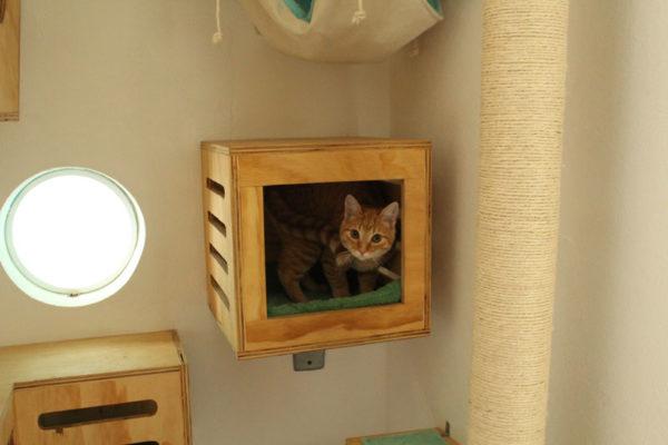 galeria-gatos-1