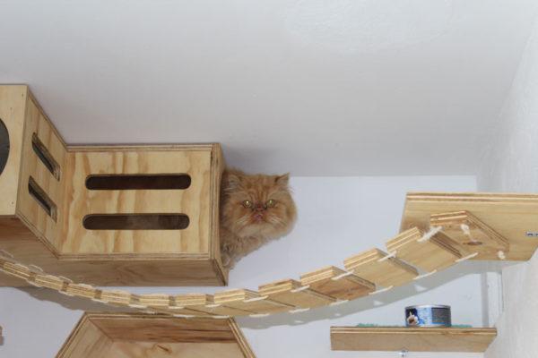 galeria-gatos-2