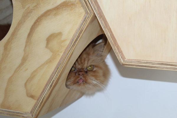 galeria-gatos-3