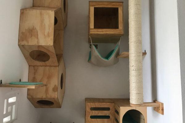 galeria-gatos-4
