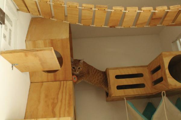 galeria-gatos-5