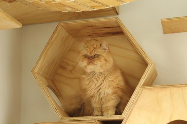 galeria-gatos-6