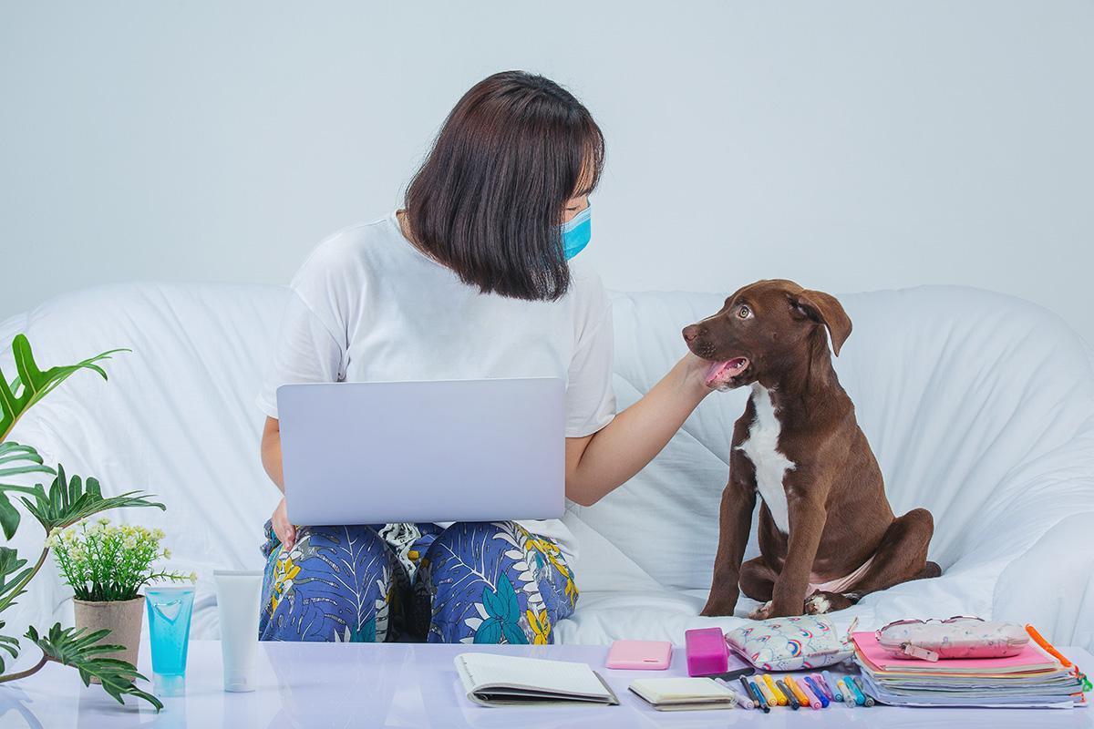 Aún no existen estudios científicos que relacionen a las mascotas con la transmisión del Covid-19